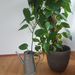 thirsty-plant-finally-water